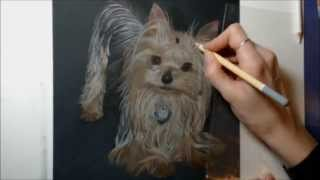 Cute Yorkshire Terrier Pastel Portrait Time Lapse Video By Dc Dennis Art