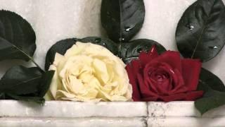 Две розы поет Олег Погудин