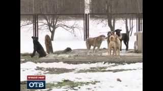 Стая бродячих собак держит в страхе больницу в Екатеринбурге(, 2014-04-29T01:53:12.000Z)