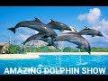 VLOG#15 DOLPHIN SHOW AT SEA LIFE PARK (FULL SHOW)