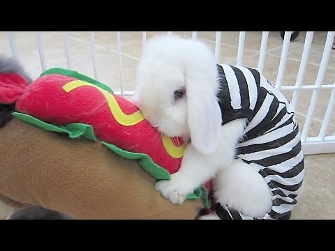 Bunny Costume Party Gone WILD!