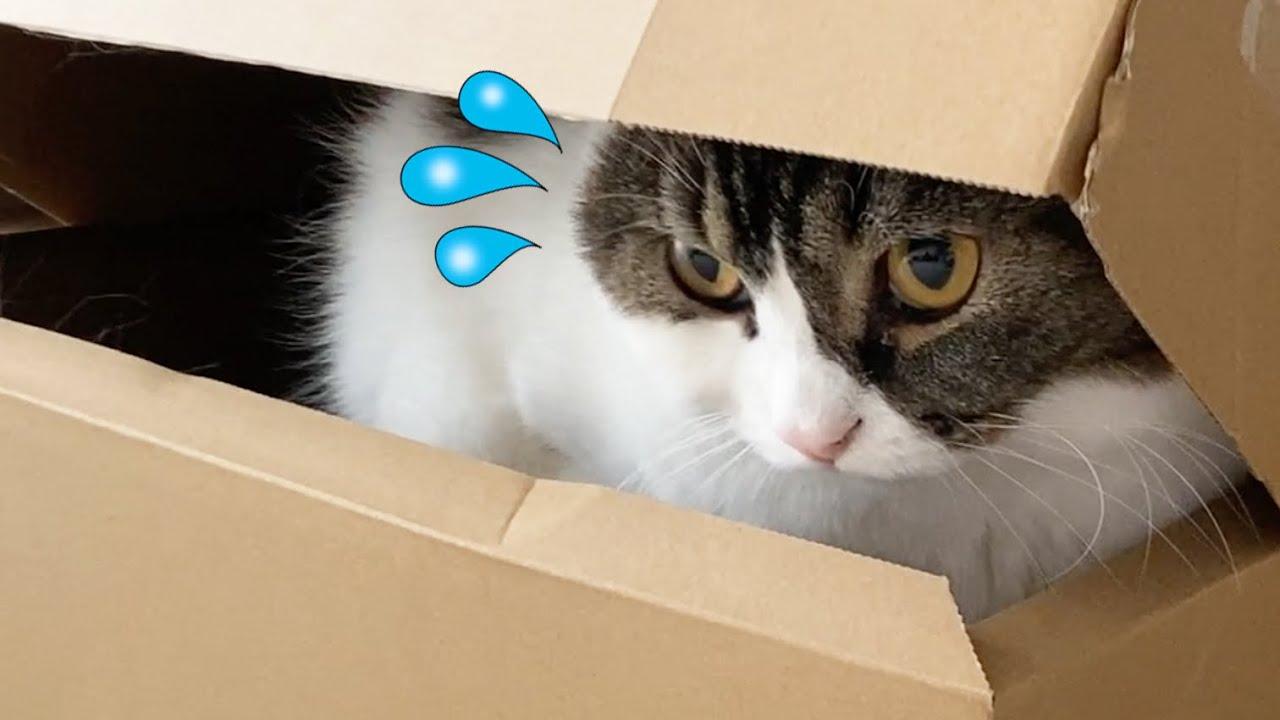 🐈秒で隠れ家がバレた息子猫w
