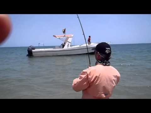 Monster Jack Crevalle on fly from Africa