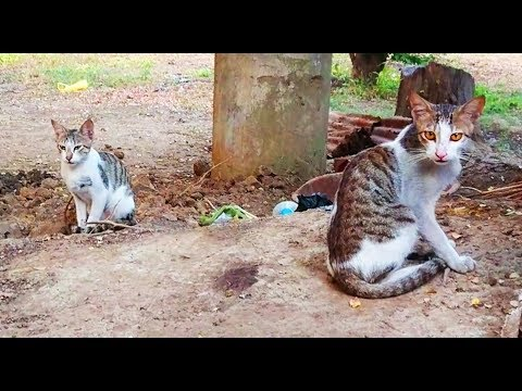 Very cute Cat kittens video, Meow meowing sound effects, बिल्ली के बच्चे