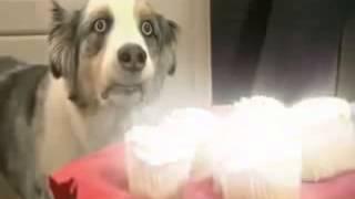 Собака почуяла ЯД