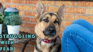 German Shepherd Anxiety - How we are OVERCOMING!