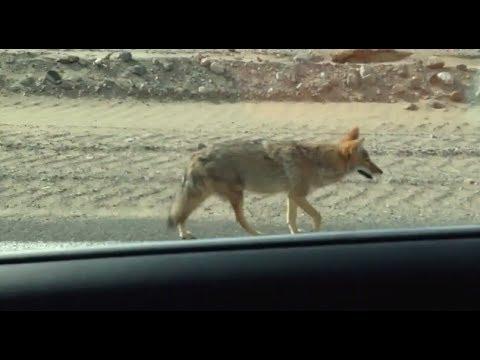 Driving through the Mojave Desert in California.