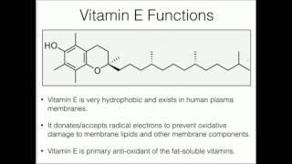 Vitamin E: Anti-oxidant Function