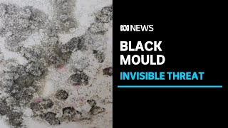 Black mould an invisible threat growing behind walls of flood-affected homes | ABC News