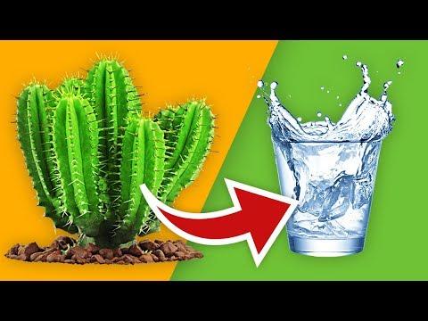 LA BOISSON LA PLUS ÉTRANGE DU MONDE ! (Eau de cactus dégustation)