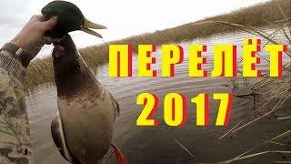 Охота на утку 2017 с мр-155 и спаниелем