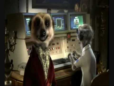 Compare The Meerkat Advert All In One Compare The Market