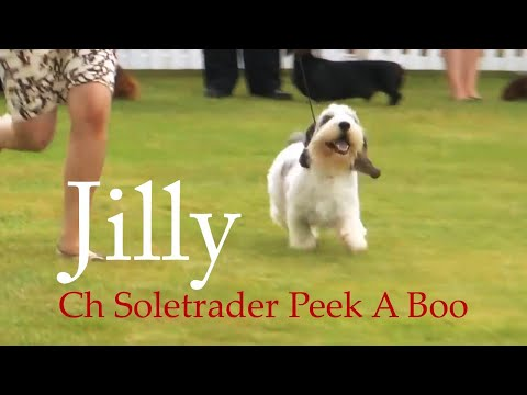 ON THIS DAY: Jilly wins Houndshow again!