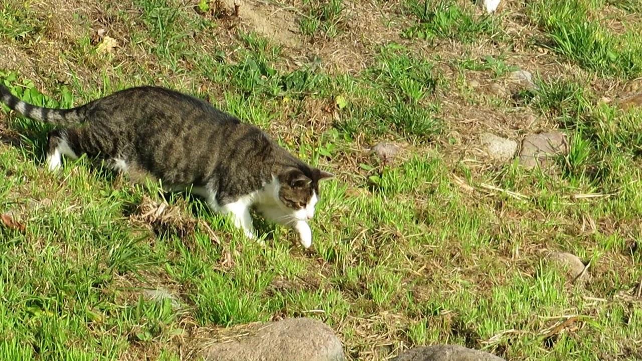 Katze Maus Spiel