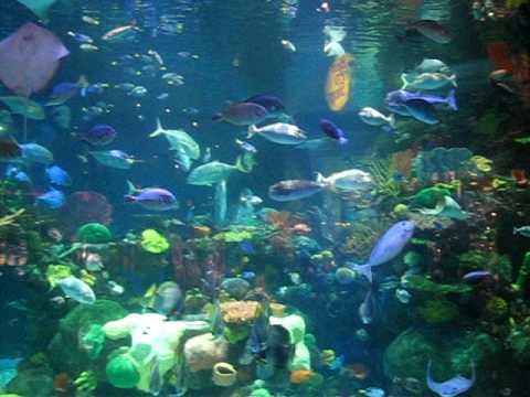 Silverton Aquarium Las Vegas    Best Free Attraction Las Veg