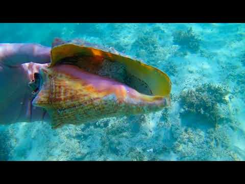 Snorkeling Catalonia Yucatan Beach 2017