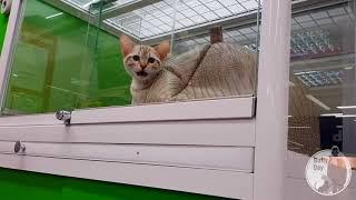 Всё, что нужно знать о покупке животных в зоомагазинах