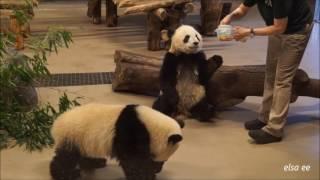 Panda snack time @Toronto Zoo