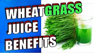 14 Health Benefits of Drinking Wheatgrass Juice Including Cancer, Weight Loss & Hair