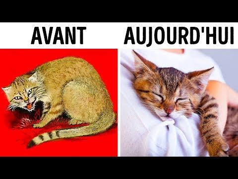 Comment les chats nous ont domestiqués (deux fois !)