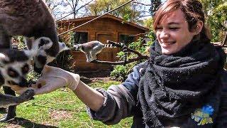 Download lagu Zoo de Beauval : les nouveaux paris du plus grand zoo de France
