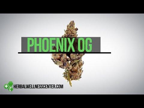 Phoenix OG strain review