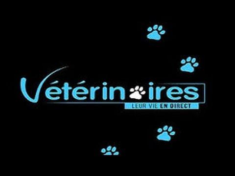 Vétérinaires, leur vie en direct  episode #1