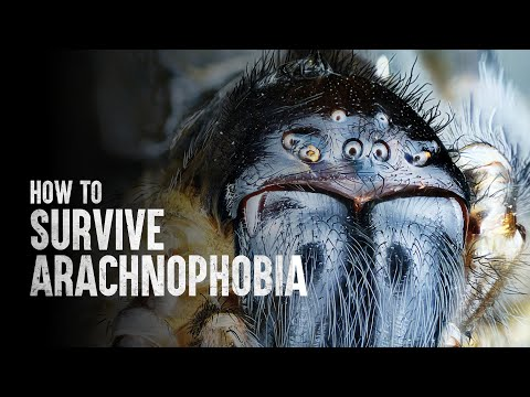 How to Survive Arachnophobia