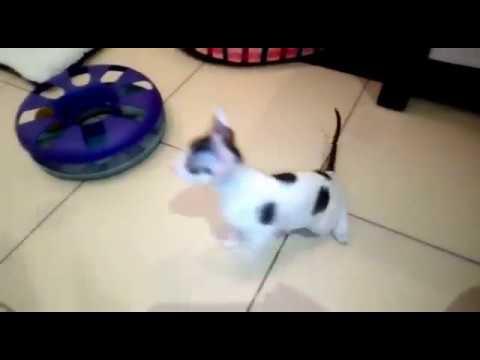 Игра Собака Рекс Онлайн igriigrinet