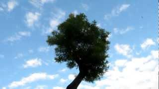 Supergreen - Cielo di mimosa