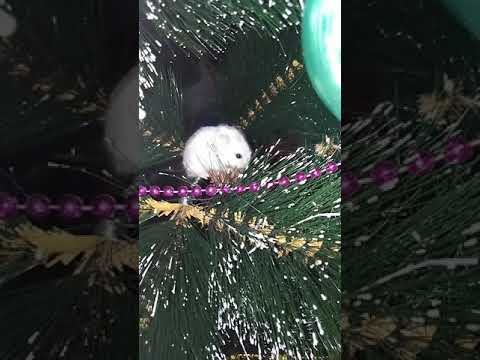 Ёлочка елка лесной аромат