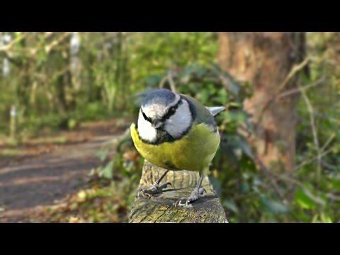 Films pour les Chats à Surveiller - Oiseaux
