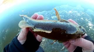 Первый лед Жерлицы и не только Подводная камера для рыбалки CALYPSO UVS 03 FDV 1111