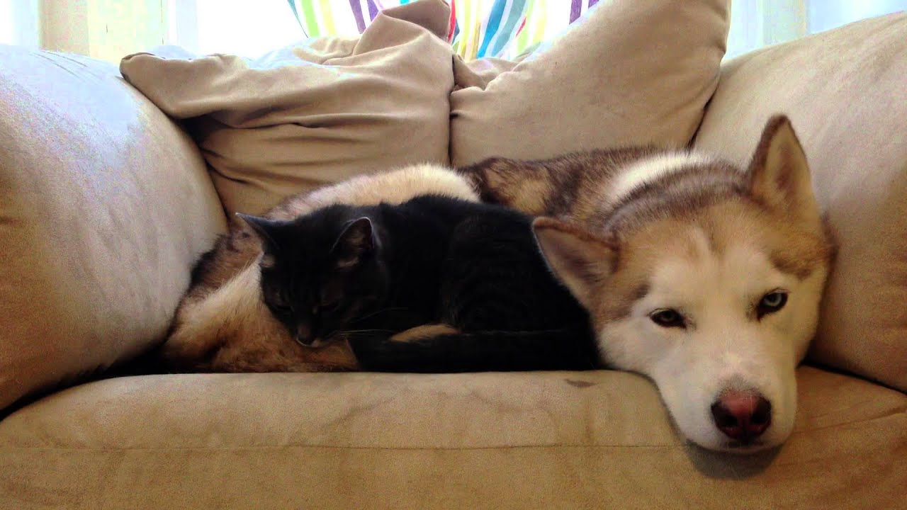 Make A Cat Bed Warmer