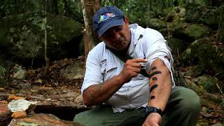Mossman Gorge and Indigenous tour.