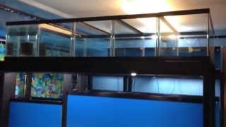 JM Chicagoland Cichlids fish room show room tour 11/20/14