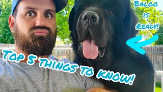 5 Things to Know Before You Get Newfie Puppies!