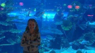 VLOG: Аквариум в Dubai Mall - самый большой аквариум в мире!(Привет всем!)Меня зовут Элина.Мне 11 лет. Видео-редактор: IMovie. Снимаю видео на свой телефон-IPhone5S. Мои Влоги..., 2014-06-16T14:44:07.000Z)