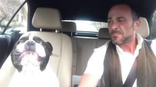 chú chó bulldog pháp hát cùng với chủ ^^ :D
