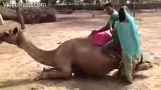 Funny Husband Wife Camel Riding Fail