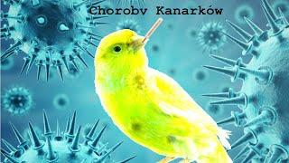 CHOROBY KANARKÓW - Porandnik na temat kanarków #11