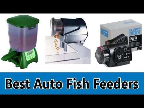 Best Auto Fish Feeders 2019 - Top 5 Best Auto Fish Feeders Review