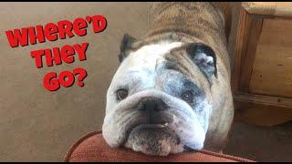 Reuben the Bulldog: (Almost) Home Alone