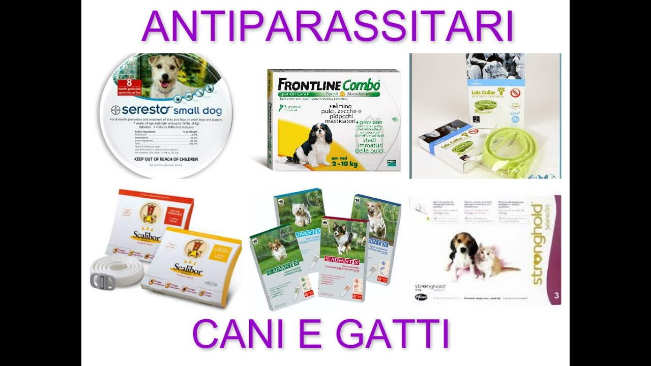 2 antiparassitari cani e gatti seresto advantix frontline for Youtube cani e gatti