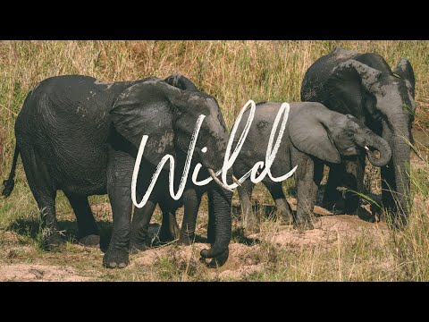 Wild | South Africa and Zimbabwe