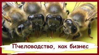 Пчеловодство, как бизнес. Сотовый мёд, это выгодный малый бизнес в деревне и на селе