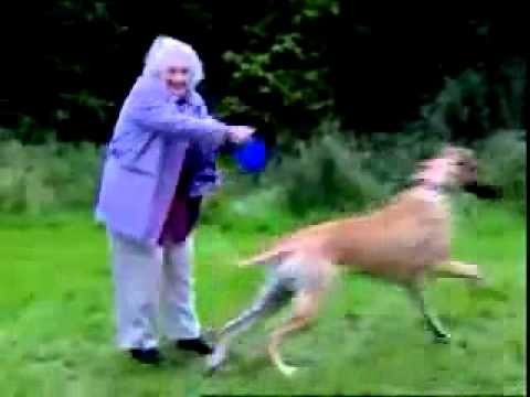Granny with a Big Dog Funny animals, comedy, dogs, cat