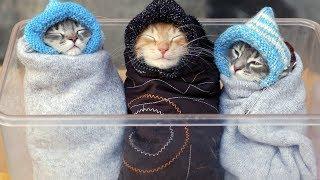 Смешные Коты и Собаки. ПРИКОЛЫ С ЖИВОТНЫМИ 2019! #13