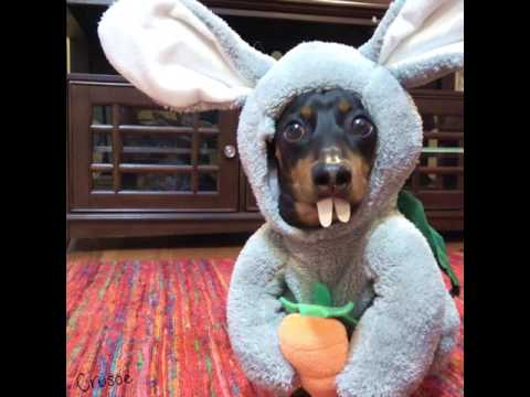 Easter Bunny Wiener Makes a Visit!