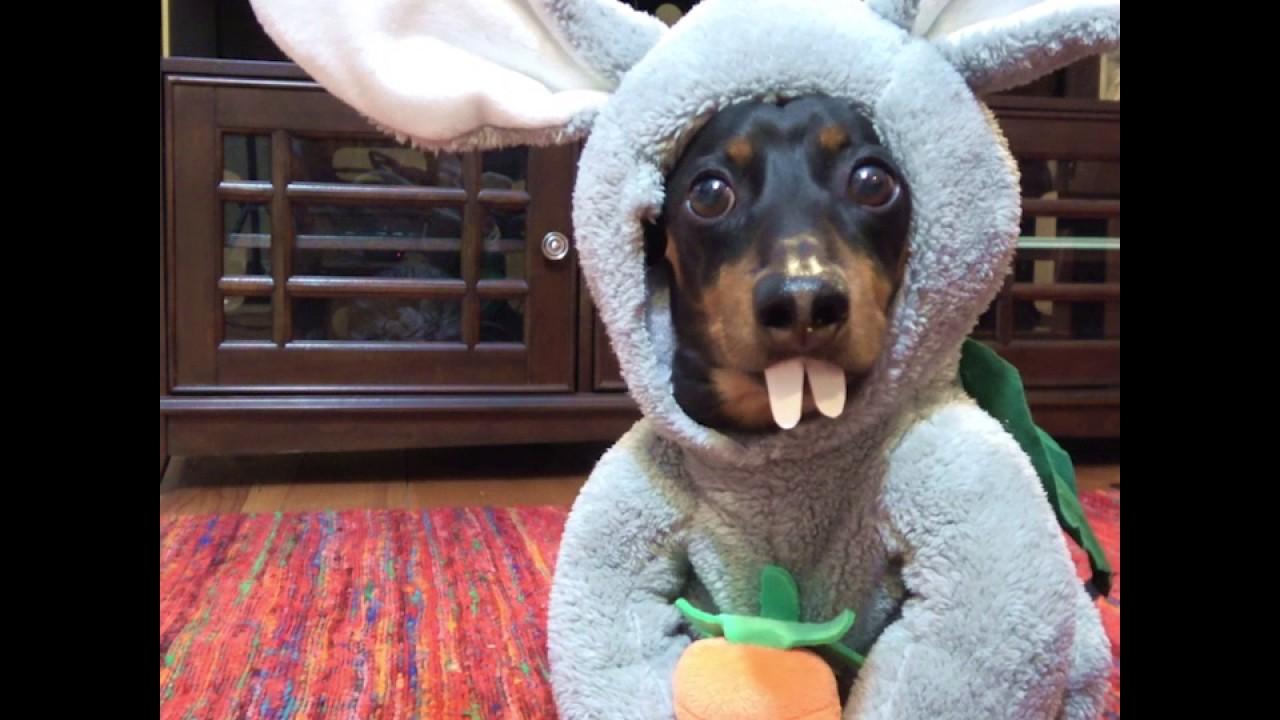 Crusoe the Celebrity Dachshund - YouTube | Foods I Want ...